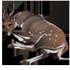 Carcass bushbuck