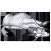 Carcass goat