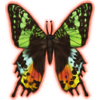 SunsetMoth Icon