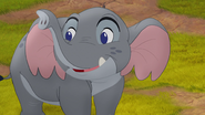 Follow-that-hippo (49)