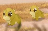 Baby Hyraxes