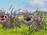 Porcupine Brothers