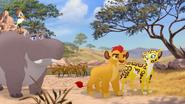 The-golden-zebra (5)