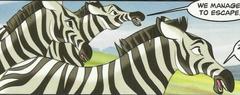 Male Zebras