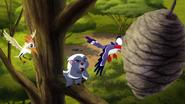 The-lost-gorillas (6)