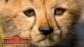 Who's Cuter? It's UnBungalievable! The Lion Guard Disney Junior