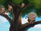 Baboons (animal)