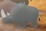 Male Rhino 4