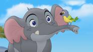 Follow-that-hippo (183)