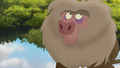 Baboons (151).png