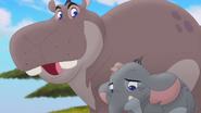 Follow-that-hippo (167)