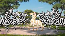 The-golden-zebra (167)