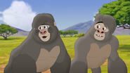 The-lost-gorillas (109)