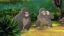 The-lost-gorillas (221)