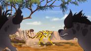 Battle for the pride lands (33)
