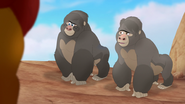 The-lost-gorillas (141)