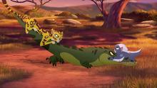 Let-sleeping-crocs-lie (346)