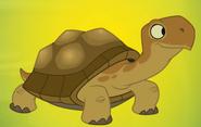 Turtle-p