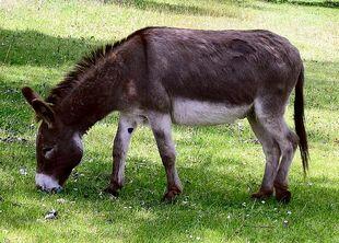 Real Life (Donkey)