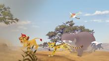 The-zebra-mastermind (23)