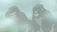 The-lost-gorillas (284)