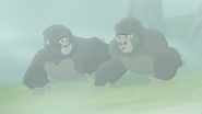 The-lost-gorillas (255)