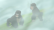 The-lost-gorillas (233)