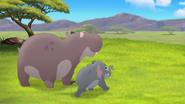 Follow-that-hippo (63)