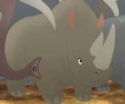 Male Rhino 3