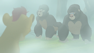 The-lost-gorillas (289)