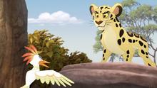 The-golden-zebra (523)