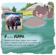 Beshte-hippo