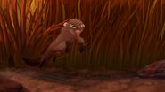 Marsh-of-mystery (329)