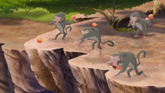 Baboons (423)