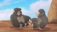The-lost-gorillas (157)