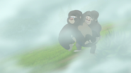 The-lost-gorillas (235)