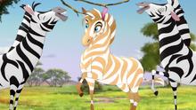 The-golden-zebra (241)