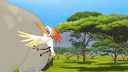 Ono-the-tickbird (175)