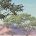 Acaciagrove-profile
