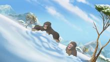 The-lost-gorillas (306)