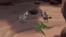 The-zebra-mastermind (490)