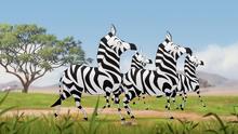 The-golden-zebra (402)