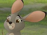 Female Hare