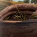 Mudpots-profile