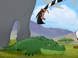 Male Crocodile/Gallery/Bunga the Wise