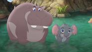 Follow-that-hippo (97)