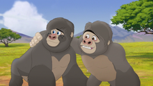 The-lost-gorillas (112)