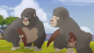 The-lost-gorillas (55)