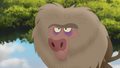 Baboons (152).png