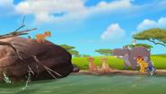 Baboons (413)